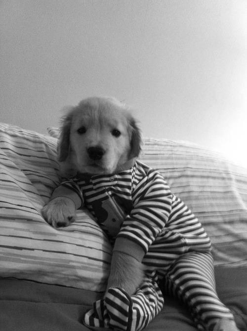CDP - Cães - filhote - macacão de bebê - 01