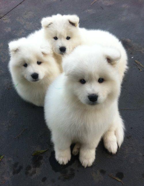 ME - Assoprdor de letras - Dogs - brancos - 01